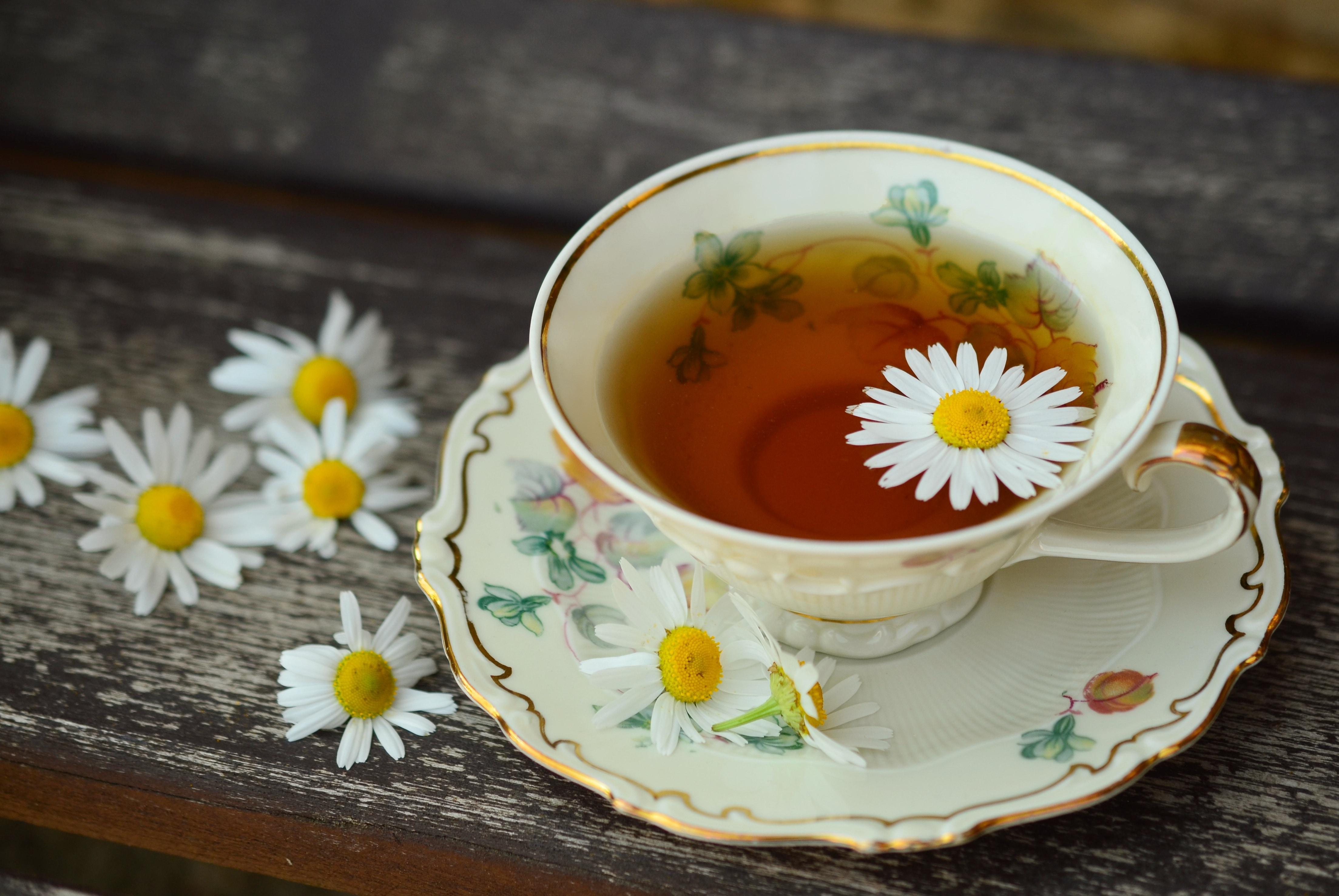 """Résultat de recherche d'images pour """"trà hoa cúc"""""""